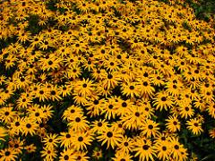 Mediterrán virágok