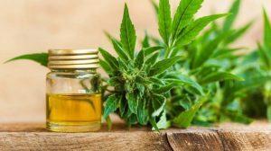 A CBD olaj gyógyszertárból is beszerezhető